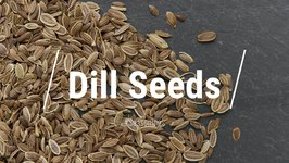 All About Dill 'Seed'
