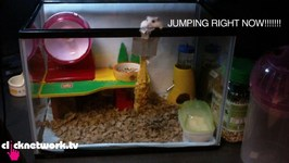 Hamster Attempts Suicide