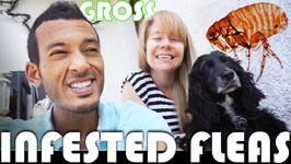 SHE'S INFESTED WITH FLEAS - FAMILY VLOGGERS DAILY VLOG