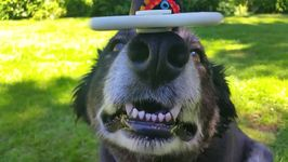 World's Coolest Dog Balances Two Fidget Spinners and Ball on Head
