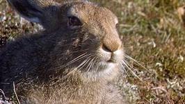 S01 E08 - The Rabbit Revealed - Wild Islands