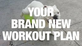 Guaranteed: Your New Workout Plan