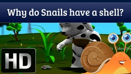 Why Do Snails Have A Shell - Q And A