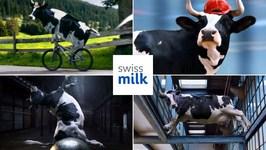 Best 6 Swiss Milk Funny Cow Commercials