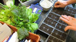 Two Methods For Seed Starting Your Loose Leaf Lettuces And Greens-Lighting Tip