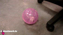 Hamster Rolls Around Office Floor