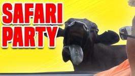 Safari Party - Funny Safari Park Compilation