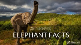 Fall in Love with Elephants - 25 Interesting Elephant Facts