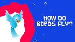 How Do Birds Fly - Interesting Facts About Birds For Kids