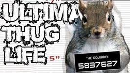 Thug Life - Animals Being Jerks - 11