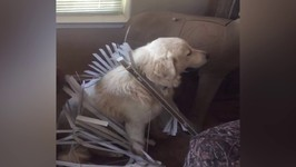 Cute Dog Gets Stuck