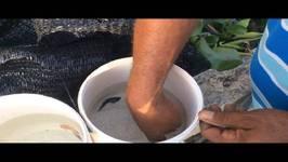 Breeding Bettas - Part 2