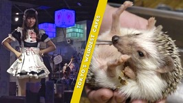Tokyo's Weirdest Cafes - Cat Cafe, Owl Cafe, Hedgehog Cafe, Maid Café