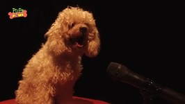 Amazing Talented Dogs - Dogs Singing