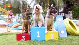 Cute Playing Puppies