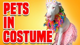 Pets In Costume - Funny Halloween Pets