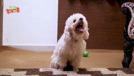 Cute Puppies Scratching - Funny Video