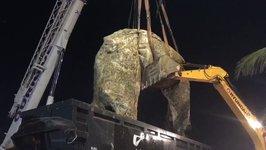 Dead Whale Removed From Rio de Janeiro's Ipanema Beach