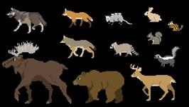 Forest Animals - Book Version