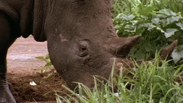 S01 E01 - The Rhino's Little Helpers - Africa from the Ground Up