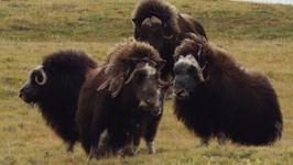 S01 E02 - Furious Life - Nordic Wild