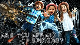 Spiders for Kids - Orb Weaver Spider- Are you Afraid of Spiders