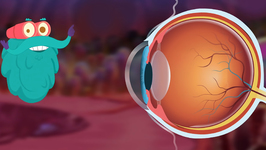 Human Eye - The Dr. Binocs Show - Best Learning Videos For Kids