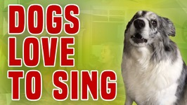 Dogs Love To Sing - Funny Dog Compilation