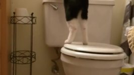 Clever Cat Flushes the Toilet Again