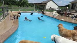 Pups Cool Down at Doggy Daycare With Paddle in Pool