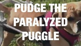 A Paralyzed Dog Who Got a Second Chance
