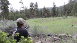 Man Experiences Mountain Lion Roars While Hunting