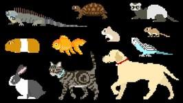 Pets - Book Version