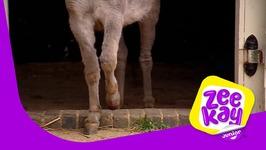 Dash's Sore Hoof - Big Barn Farm - Episode 21