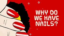 Interesting Fact About Beautiful Nails And Human Body - Why Do We Have Nails