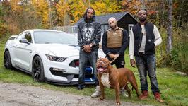 Worlds Biggest Pitbull Hulk Stars In Rap Video - Dog Dynasty