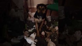 Roommate Catches Guilty Dog Making a Mess Around the House