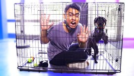 Escape The Dog Cage Challenge
