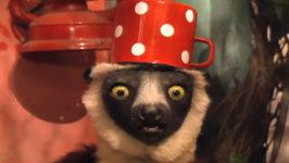 Happy Lemur Day - Ep 5