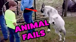 Animal Fails Of March 2017 - Fail Clips Daily - Funny Fail Compilation