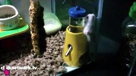 Hamster Gets Stuck