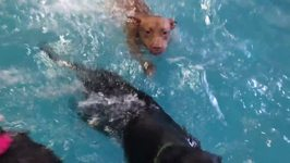 Pet Resort Gives Pups the Freedom to Swim in Pool