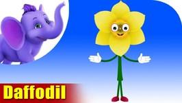 Daffodil - Flower Song