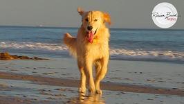 Dog Love - Beach Dogs - PetsADDLife - Dog Party