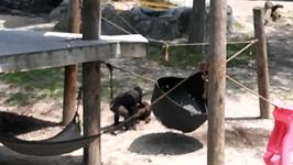 Bonobo Throws Brick at a Family in Florida Zoo