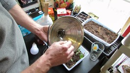 How To Build Your First Vegetable Grow Light For Seed Starting Tomatoes-Easy And Inexpensive