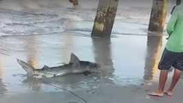 Shark Bites Man on Wrightsville Beach, North Carolina