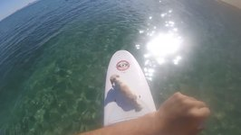 Paddle Boarding With Coco the Dog at the Great Barrier Reef