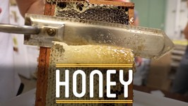 Honey - How To Make Everything- Sandwich (3/12)