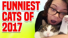 Funniest Cats of 2017 - Funny Cat Compilation